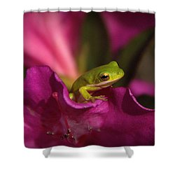 The Azalea Bed Shower Curtain by Charlotte Schafer