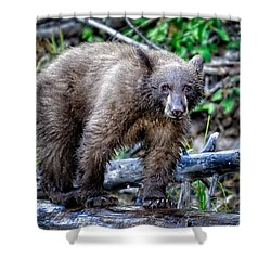 Shower Curtain featuring the photograph The Balance Beam by Jim Thompson