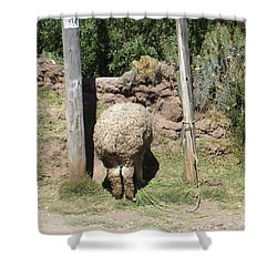 The Bashful Llama Shower Curtain