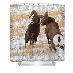 The Battle For Dominance Shower Curtain by Jim Garrison