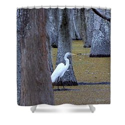 Shower Curtain featuring the photograph The Bayou's White Knight by John Glass