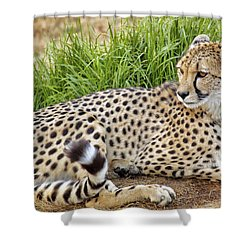 The Beautiful Cheetah Shower Curtain by Jason Politte