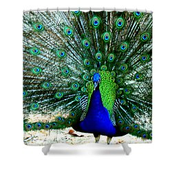 Shower Curtain featuring the photograph The Beautiful Plumage by Kathy  White