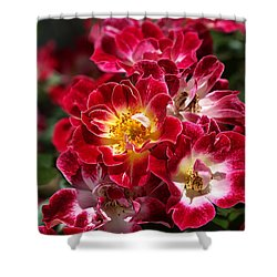 The Beauty Of Carpet Roses  Shower Curtain