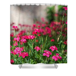 The Beauty Of Maiden Pinks Shower Curtain