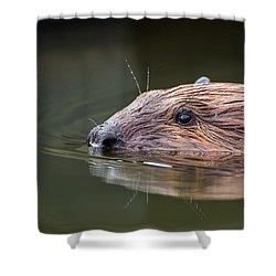 The Beaver Shower Curtain