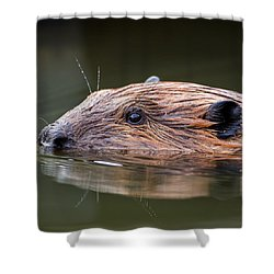 The Beaver Square Shower Curtain