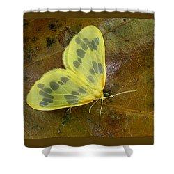 The Beggar Moth Shower Curtain
