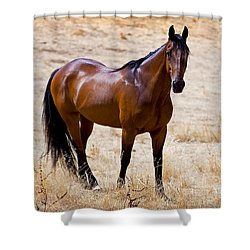 The Big Bay Shower Curtain by Michelle Wrighton