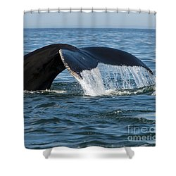 The Big Blue In The Bigger Blues... Shower Curtain