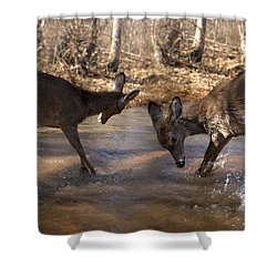 The Bill And Mike Show Shower Curtain by Bill Stephens