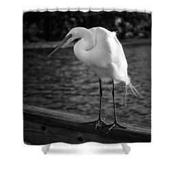 The Bird Shower Curtain by Howard Salmon