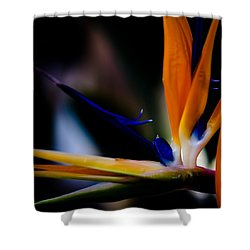 The Bird Of Paradise Shower Curtain by David Patterson
