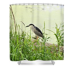 The Black-crowned Night Heron Shower Curtain by Verana Stark