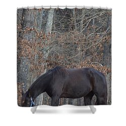 The Black Shower Curtain by Maria Urso