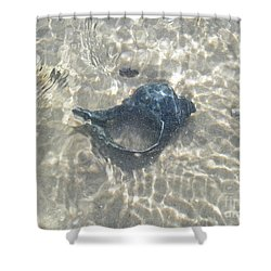The Black Seashell Shower Curtain by Mother Nature