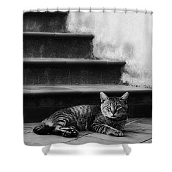 Shower Curtain featuring the photograph The Boss by Laura Melis