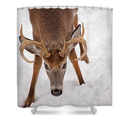 The Buck Stare Shower Curtain by Karol Livote