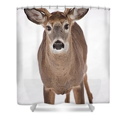 The Buck Stops Here Shower Curtain by Karol Livote
