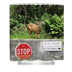 The Buck Stops Here Shower Curtain by Kym Backland