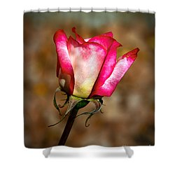 The Bud Shower Curtain by Robert Bales