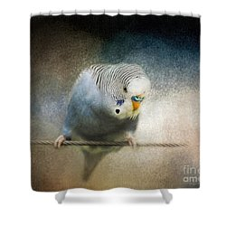 The Budgie Collection - Budgie 3 Shower Curtain by Jai Johnson