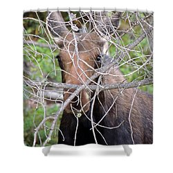 The Calf Shower Curtain by Lynn Sprowl