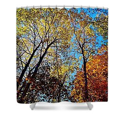 Shower Curtain featuring the photograph The Canopy by Daniel Thompson