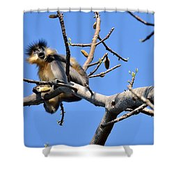 The Capped One Shower Curtain