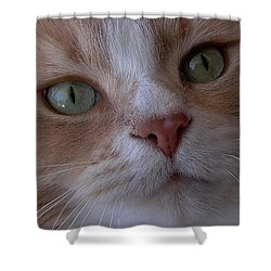 The Cat Eyes Shower Curtain