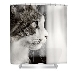 The Cat's Meow Shower Curtain