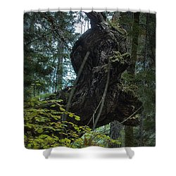 The Centaur Shower Curtain by Belinda Greb