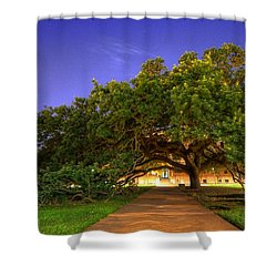 The Century Tree Shower Curtain by David Morefield