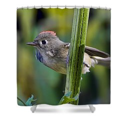 Shower Curtain featuring the photograph The Challenge by Gary Holmes