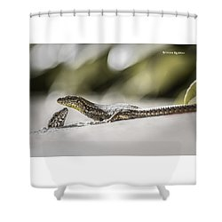 Shower Curtain featuring the photograph The Charming Lizards by Stwayne Keubrick