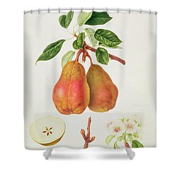The Chaumontelle Pear Shower Curtain by William Hooker