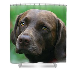 The Chocolate Lab Shower Curtain