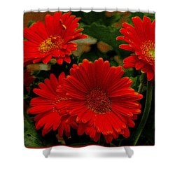 Gerbera Daisies Red Shower Curtain