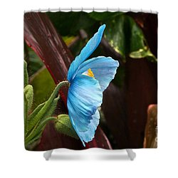 The Colors Of The Himalayan Blue Poppy Shower Curtain