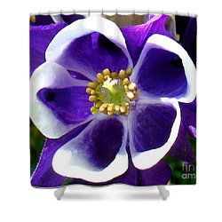 Shower Curtain featuring the photograph The Columbine Flower by Patti Whitten