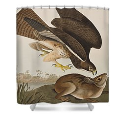The Common Buzzard Shower Curtain by John James Audubon