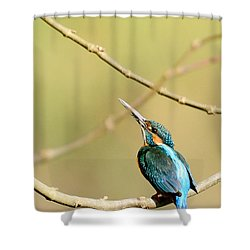 The Common Kingfisher Shower Curtain by Fotosas Photography