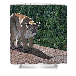 The Cougar 1 Shower Curtain by Ernie Echols