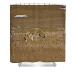 The Coyotes Painterly Shower Curtain by Ernie Echols