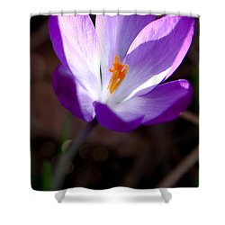 The Crocus Shower Curtain by David Patterson