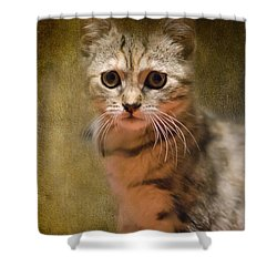 The Cutest Kitty Shower Curtain