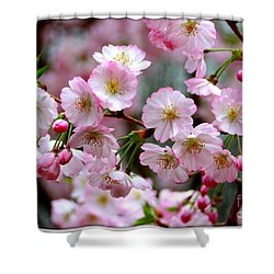 The Delicate Cherry Blossoms Shower Curtain by Patti Whitten
