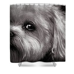 The Dog Next Door Shower Curtain by Bob Orsillo