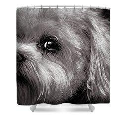 The Dog Next Door Shower Curtain