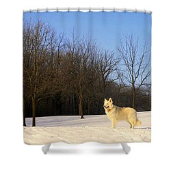 The Dog On The Hill Shower Curtain by Kay Novy